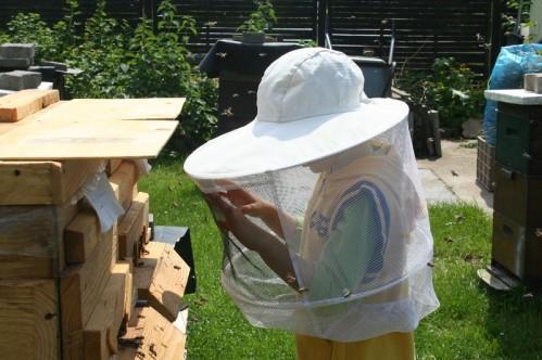 Dass erste Mal an Bienen